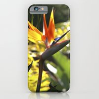 iPhone & iPod Case featuring Bird of Paradise II by TS Photography