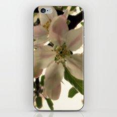 Spring Romance iPhone & iPod Skin