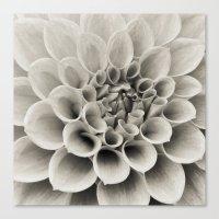 Dahlia Study I Canvas Print