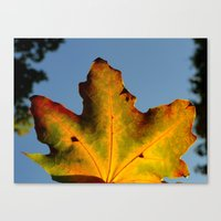 Canvas Print featuring Leaf by Daniel Clifford