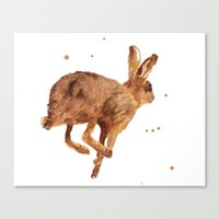 hare, mad as a march hare, british wildlife, meadow animals, haring about Canvas Print