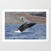 Humpback Calf Breaching Art Print