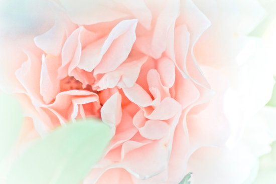 soft and pink Art Print