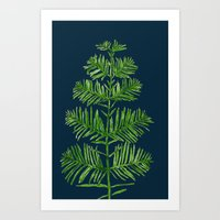 Dawn Redwood Art Print
