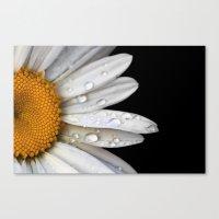 tansy Canvas Print