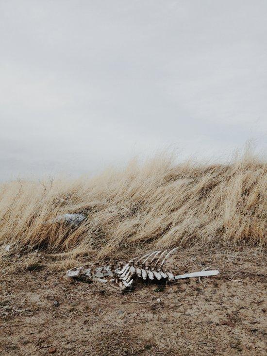 Winded Skeleton Art Print