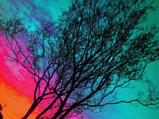 Behind The ol' Crape Myrtle Art Print