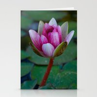 Water Lily 4 Stationery Cards