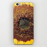Salad Days iPhone & iPod Skin
