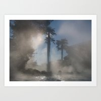 Palm Trees In The Fog Art Print