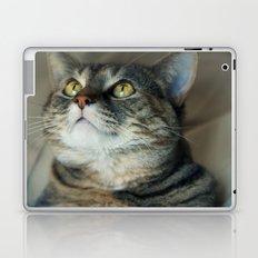 Kitty Cat Laptop & iPad Skin