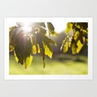 leaves at sunset Art Print