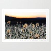 Sagebrush Art Print