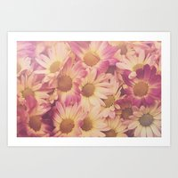 Sun Drenched Daisies Art Print