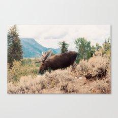 Moose 2 Canvas Print