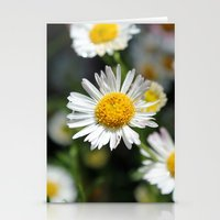 Darling Daises Stationery Cards