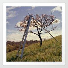 Ladder in Cherry Tree Art Print