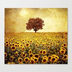 Lone Tree & Sunflowers F… Canvas Print
