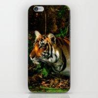 Bengal Beauty iPhone & iPod Skin