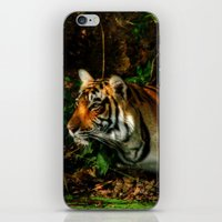 Bengal Beauty iPhone & iPod Skin