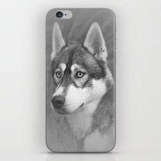 Siberian Husky iPhone & iPod Skin