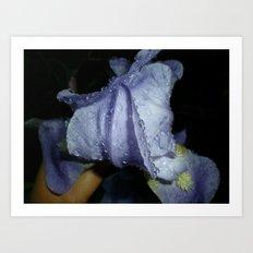 Iris After A Thunderstorm Art Print