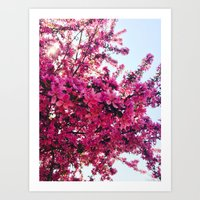 Apple Blossom-2014 Art Print