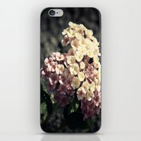 A Simple Gift iPhone & iPod Skin
