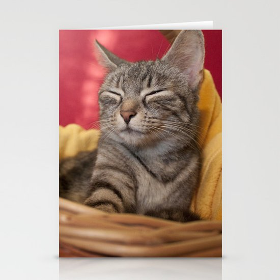 Cat photography Stationery Card
