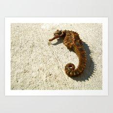 Seahorse Seahell Art Print