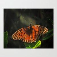 Shaded Fritillary Butterfly Canvas Print