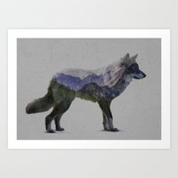 The Rocky Mountain Gray Wolf Art Print