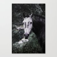 Free Horse Canvas Print