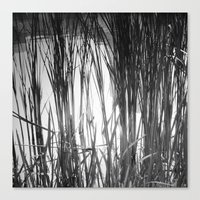 Reeds Reflected Canvas Print