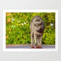 Catz Art Print