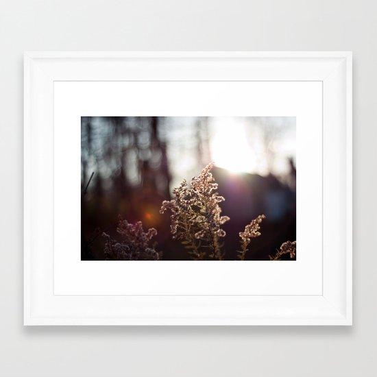 Goldenrod Light Framed Art Print