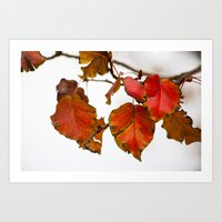 Autumn On A Branch Art Print