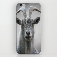 The Old Goat iPhone & iPod Skin