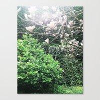 Plastic Magnolias Canvas Print