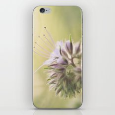 Phacelia iPhone & iPod Skin