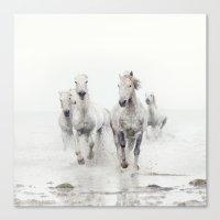 Ghost Riders - Horse Art Canvas Print