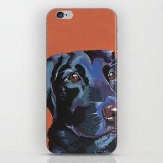 Black Labrador Gaze iPhone & iPod Skin