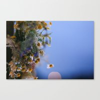 Daisies In Blue Canvas Print