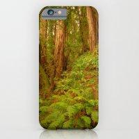 Redwoods Regional II iPhone 6 Slim Case