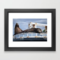 Sea Lion in the Puget Sound Framed Art Print