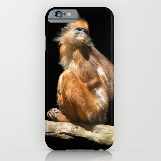 Banded Leaf Monkey Howletts iPhone & iPod Case