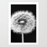 Missing Dandelion Art Print