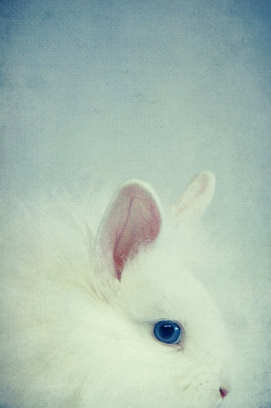 Blue Eyes II Art Print
