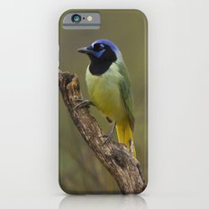 Green Jay iPhone 6 Slim Case