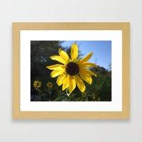 sunflower. Framed Art Print